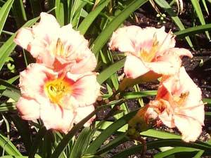 Gėlės (Slideshow)